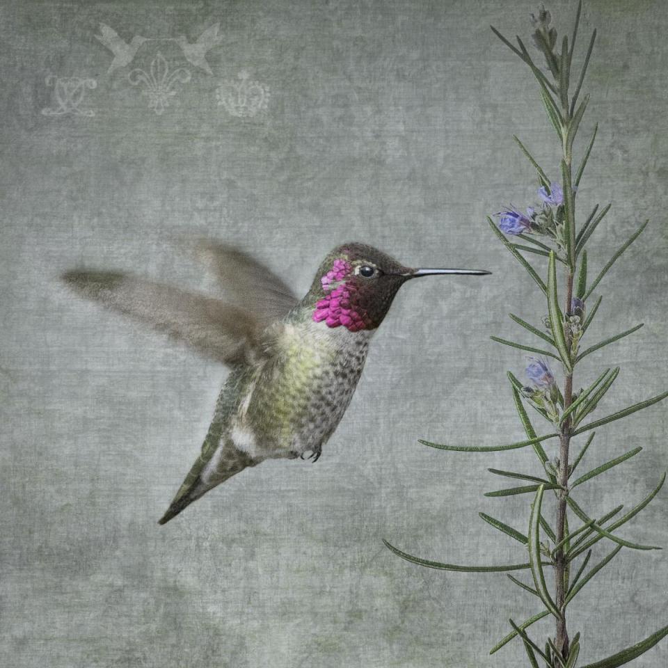 Edit Artwork   Photograph by June Hunter   Artists for Conservation