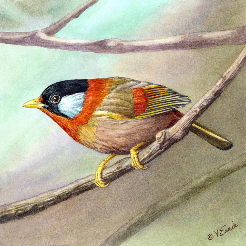 Add Artwork   Wallhanging by Vicky Earle   Artists for Conservation