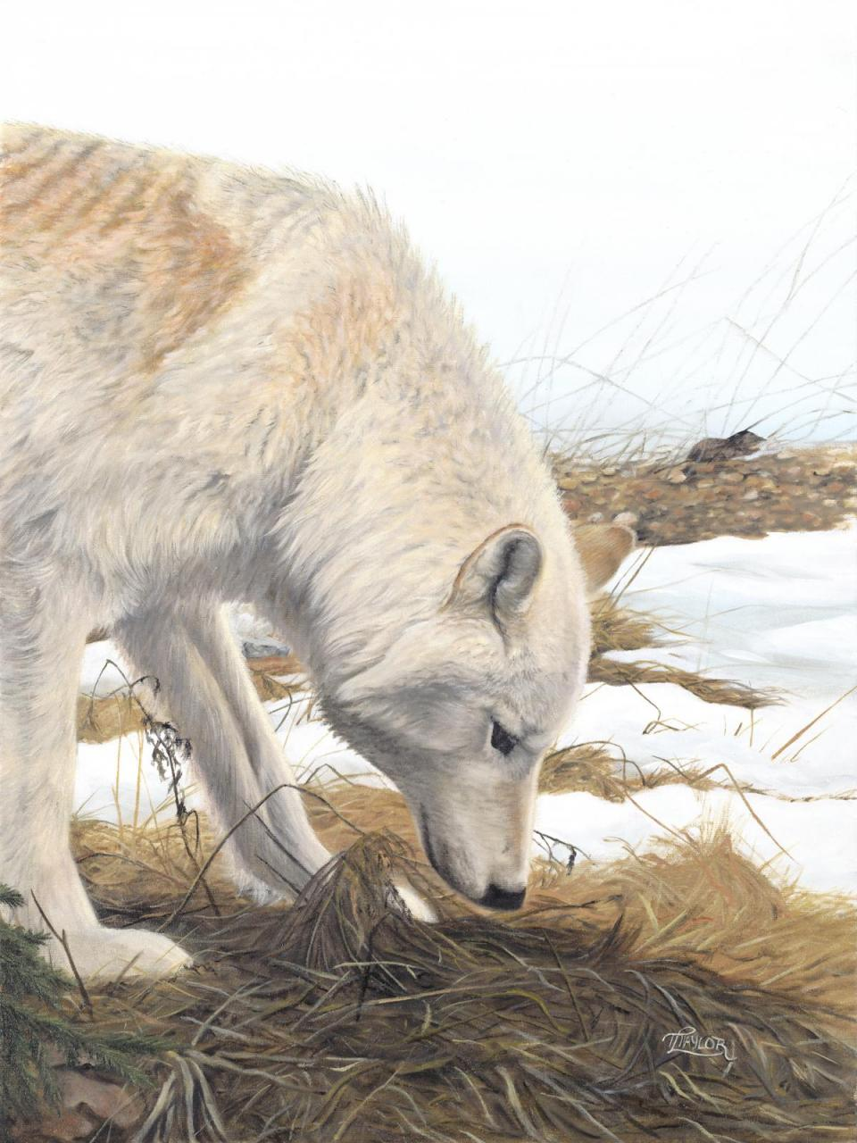 Add Artwork   Wallhanging by Tammy Taylor   Artists for Conservation