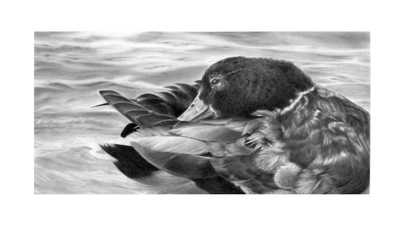 Edit Artwork | Wallhanging by Laurene Spino | Artists for Conservation