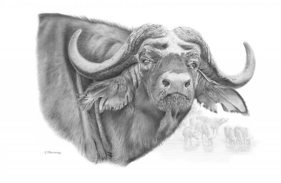Edit Artwork | Wallhanging by John Rainbird | Artists for Conservation