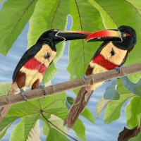 Fiery-billed Aracaris | Wallhanging by Lynn Erikson | Artists for Conservation 2018