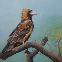Black-breasted Buzzard (Hamirostra melanosternon) | Wallhanging by Paula Wiegmink | Artists for Conservation 2018