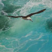Laysan Albatross-Moli | Wallhanging by Peggy Sowden | Artists for Conservation 2018