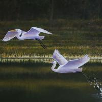 Silent Splash   Wallhanging by Len Rusin   Artists for Conservation 2018