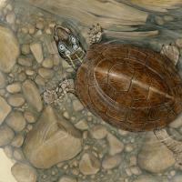 Four-eyed Turtle   Wallhanging by Matt Patterson   Artists for Conservation 2018