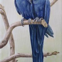 Hyacinth Blue Macaws   Wallhanging by Werner Rentsch   Artists for Conservation 2018