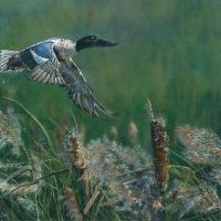 The Shoveler's Take-off | Wallhanging by Gery van der Kelen | Artists for Conservation 2018