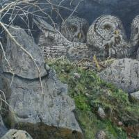Cliff Dwellers | Wallhanging by Suzie Seerey-Lester | Artists for Conservation 2018