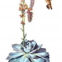 Echeveria and Rufous Hummingbird | Wallhanging by Vicky Earle | Artists for Conservation 2018
