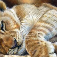 A Lion Sleeps Tonight | Wallhanging by Gemma Gylling | Artists for Conservation 2018