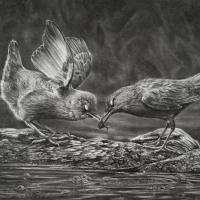 Little Dippers | Wallhanging by Kevin Johnson | Artists for Conservation 2018