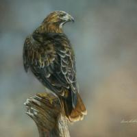 Stalker - Red-tailed Hawk | Wallhanging by Bonnie Latham | Artists for Conservation 2018