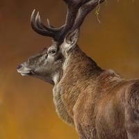 New Zealand Red Deer | Wallhanging by Christopher Walden | Artists for Conservation 2018