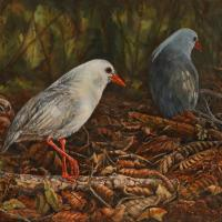 Kagu Foraging | Wallhanging by Candy McManiman | Artists for Conservation 2018