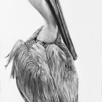 Pelican Profile | Wallhanging by Patsy Lindamood | Artists for Conservation 2018