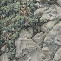 Song of the Canyon: Canyon Wren and Rock Spirea | Wallhanging by Sharon K. Schafer | Artists for Conservation 2018