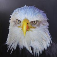 America | Wallhanging by Nelda Warkentin | Artists for Conservation 2020