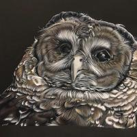 Blinded Wisdom | Wallhanging by Ashley Roll | Artists for Conservation 2020