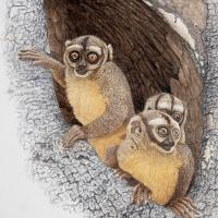 Coming-out Party: Owl Monkeys | Wallhanging by Walt Anderson | Artists for Conservation 2020