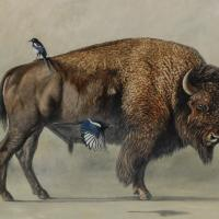 American Bison & Magpies  | Wallhanging by Rob Dreyer | Artists for Conservation 2020