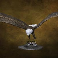 Fly Fishing | Sculpture by Brent Cooke | Artists for Conservation 2020
