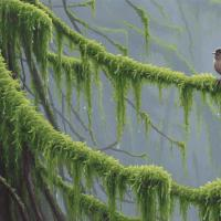 Pacific Forest | Wallhanging by Joseph Koensgen | Artists for Conservation 2020