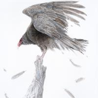 Ruffled | Wallhanging by Judy Studwell | Artists for Conservation 2020