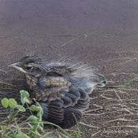 Robin Fledgling | Wallhanging by David Kitler | Artists for Conservation 2020
