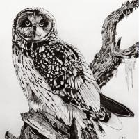 Night Assassin - Short-eared Owl | Wallhanging by Doug Hiser | Artists for Conservation 2020