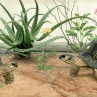 Radiated Tortoises | Wallhanging by Matt Patterson | Artists for Conservation 2020