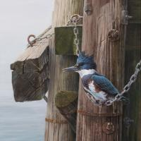 """Hanging Out """"Belted Kingfisher"""" 