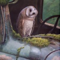 """Curiosity """"Barn Owl"""" 