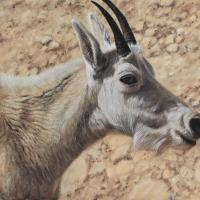 Basking In The Light   Wallhanging by Tammy Taylor   Artists for Conservation 2021