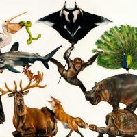 World Wild Web | Wallhanging by Sailev | Artists for Conservation 2021