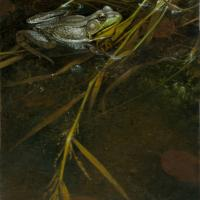 Guard Frog | Wallhanging by Patricia Pepin | Artists for Conservation 2021
