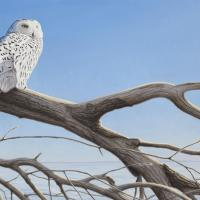 Snowy Owl | Wallhanging by Joseph Koensgen | Artists for Conservation 2021