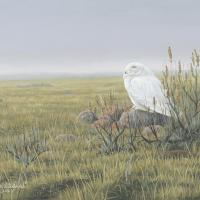 Days of Spring - Snowy Owl   Wallhanging by Colin Starkevich   Artists for Conservation 2021