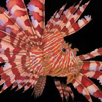 A Portrait Of A Lionfish   Wallhanging by Kim Toft   Artists for Conservation 2021