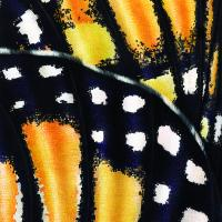 Monarch Butterfly Wings   Wallhanging by Jane Zimmermann   Artists for Conservation 2021