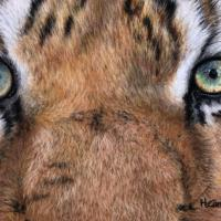 Tiger Eyes   Wallhanging by Holly Cannon   Artists for Conservation 2021