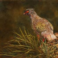 Blood Pheasant | Wallhanging by Candy McManiman | Artists for Conservation 2021