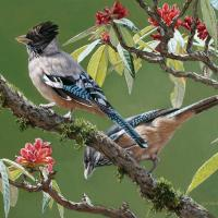Black-headed Jay   Wallhanging by Chirag Thumbar   Artists for Conservation 2021
