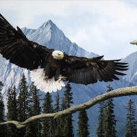 All the Majesty | Wallhanging by Bruce Lawes | Artists for Conservation 2021