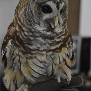 Art of Birds & Wildlife with Linda Harrison-Parsons