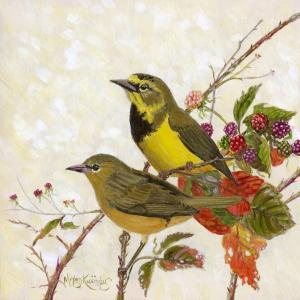 Bachman's Warbler by AFC