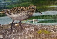 Edit Artwork   Wallhanging by Katie Roberts   Artists for Conservation