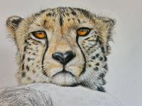 Edit Artwork   Wallhanging by Charlotte Williams   Artists for Conservation